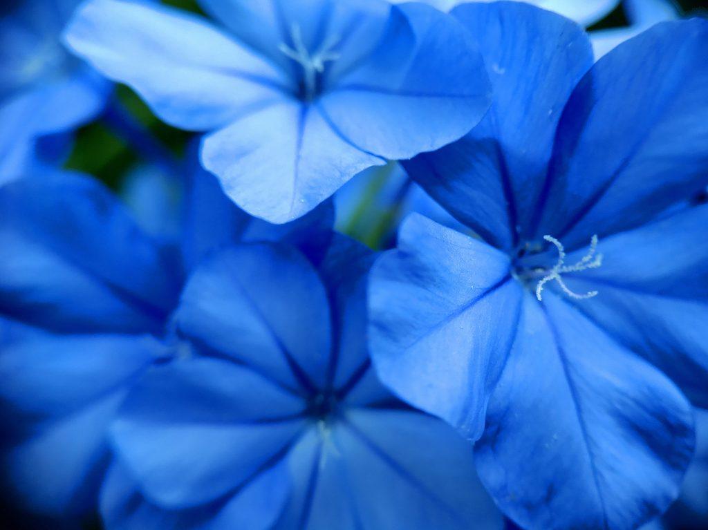スマホ用マクロレンズで撮影した花びら