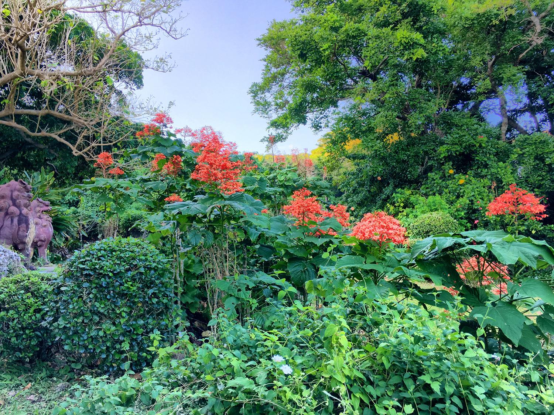花が満開の庭