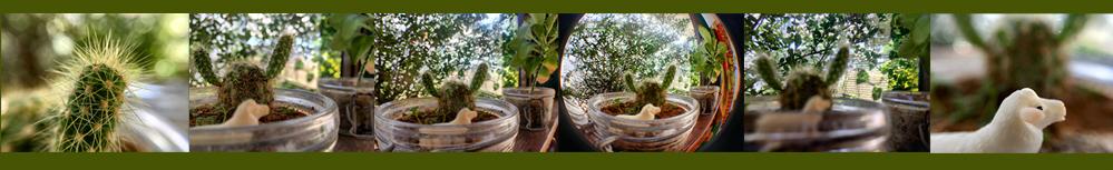 5スマホ用外付カメラレンズセットで撮った画像比較