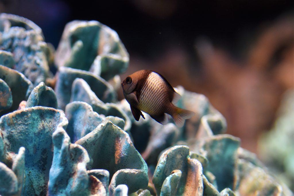 熱帯魚撮影
