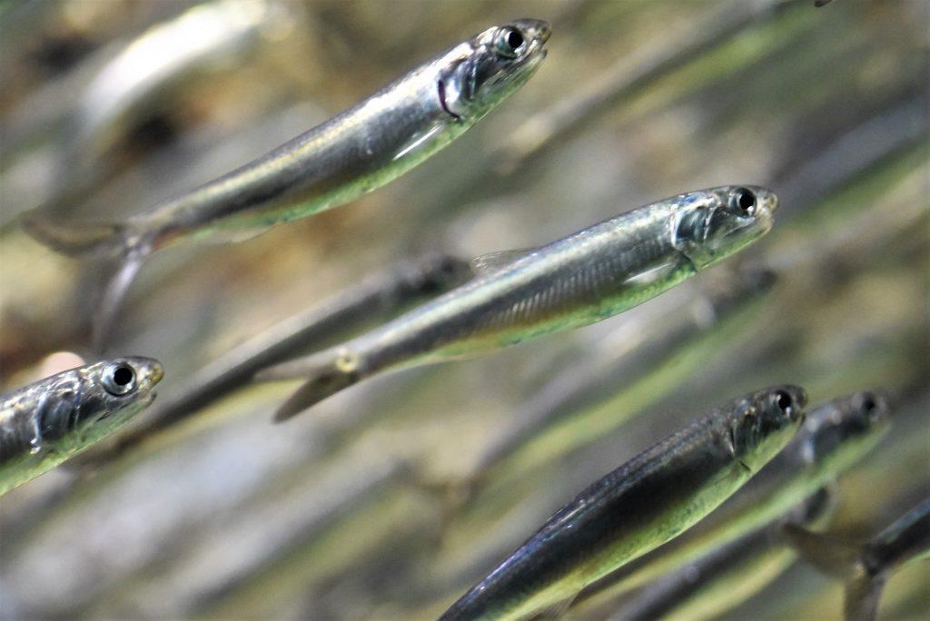 水族館で動く魚の撮り方