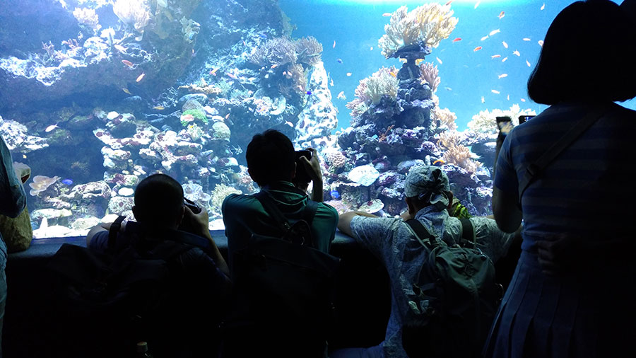 水族館での写真撮影セミナー
