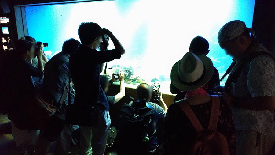 水族館での写真撮影