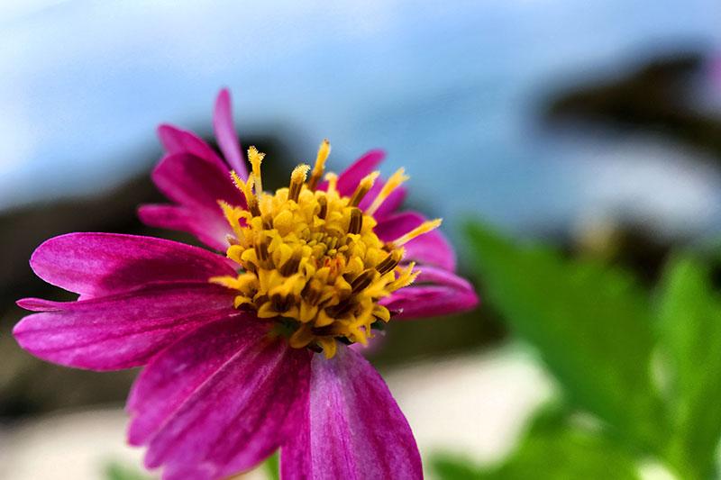 スマホ用マクロレンズで撮影した花の写真